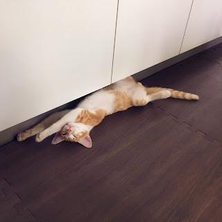 シャバアーサナ 猫