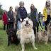 DOG DATES! Πώς οι σκύλοι φέρνουν κοντά τους μοναχικούς ηλικιωμένους...
