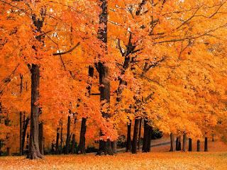 arboles-en-otoño