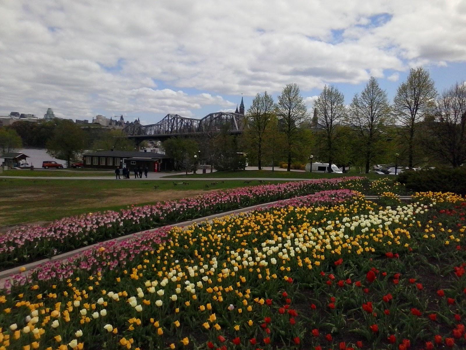 Ottawa Daily Photo: Within The Park