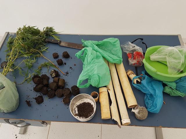 Plantação de maconha