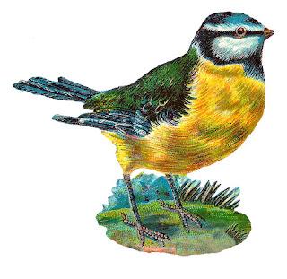 https://3.bp.blogspot.com/-95uVziYFaeI/WZuSxE3xqDI/AAAAAAAAgxs/E9AsJRlbl88ilwtnY6XHRtULBNIPJ-wQQCLcBGAs/s320/bird-clipart-image-bluebird-illustration-digital.jpg