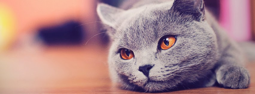 Infographic - Mèo và những điều chưa biết về Mèo