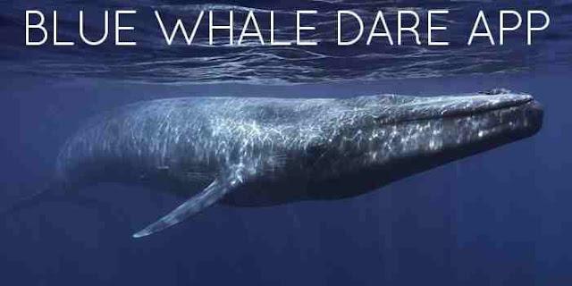 Download Blue Whale Dare App Full APK: Task Challenges Details?