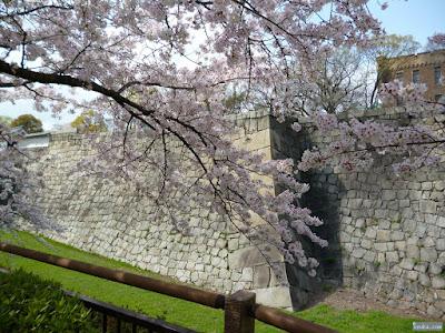 桜越しの内堀