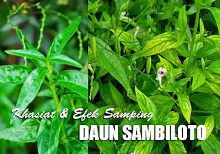 Daun Sambiloto, manfaat daun sambiloto untuk wajah, khasiat sambiloto untuk kulit, efek samping sambiloto, rasa daun sambiloto, manfaat sambiloto untuk diabetes, efek samping minum sambiloto tiap hari, ciri daun sambiloto, manfaat sambiloto untuk jerawat
