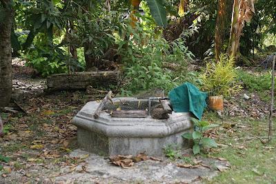 Perigi didalam istana Kesultanan yang digunakan untuk mandi Raja dan anggota kerajaan