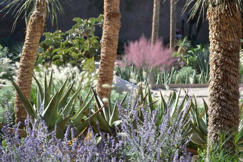 Hierbas y suculentas en el jardín exótico