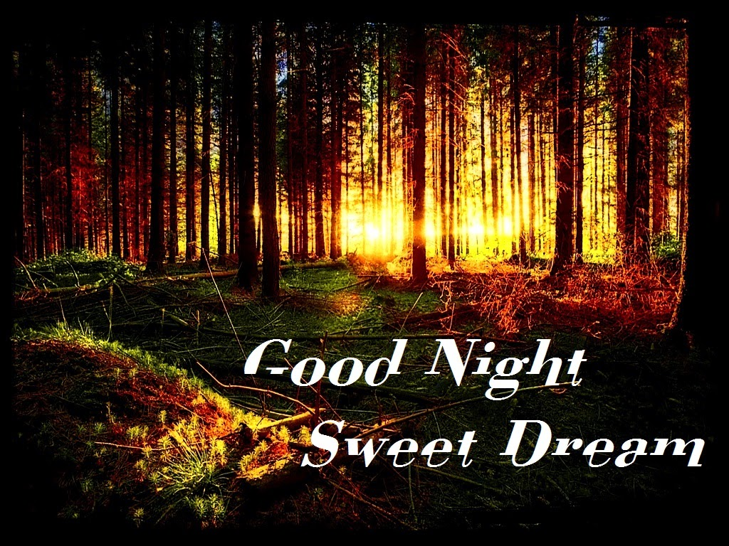 Best Good Night SMS Wishes Text Messages Cards Festival