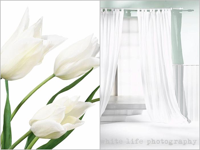 white life ©: September 2011