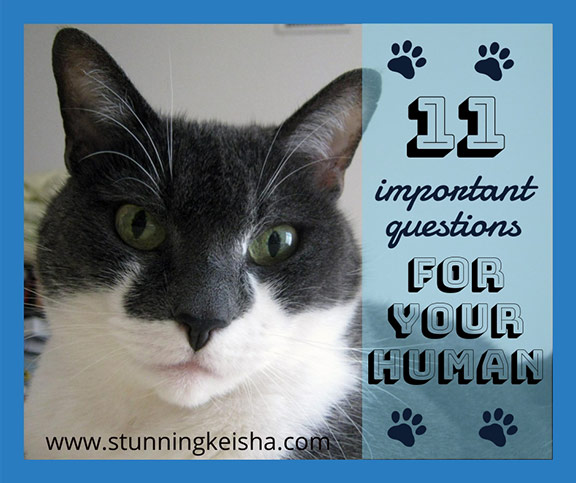11 Important Questions For Your Human