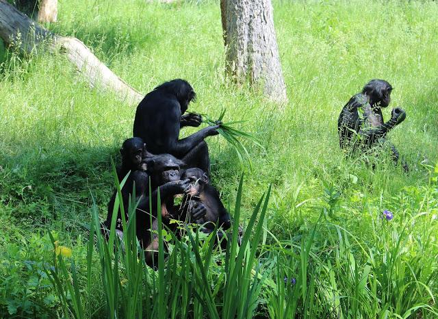 Zoo Leipzig Pongoland