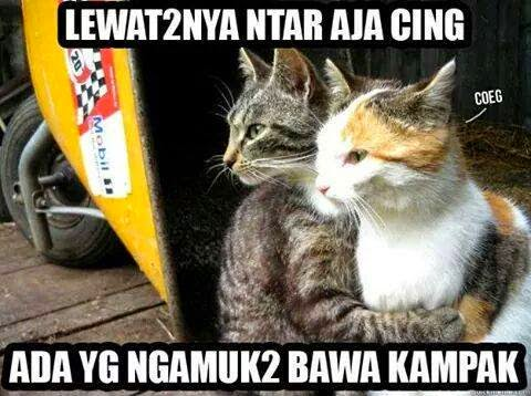 Meme Kucing Lucu Bikin Ketawa Muhilham