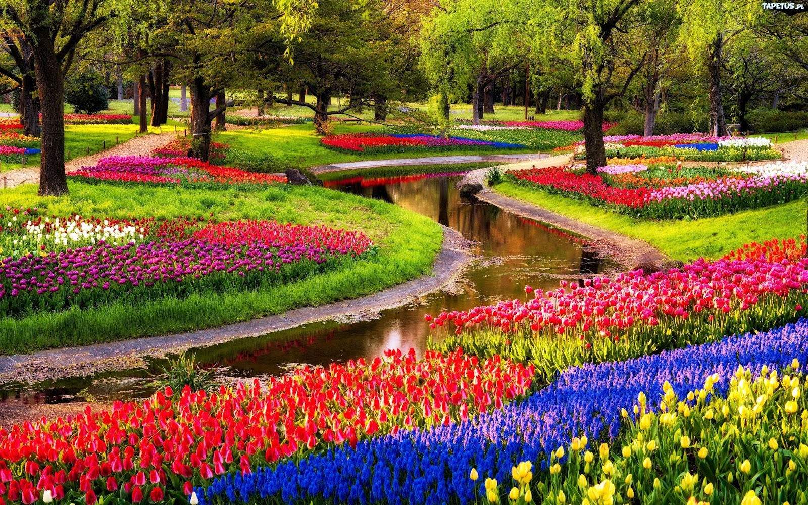 Keukenhof Park, Holland, The Netherlands Hd Background