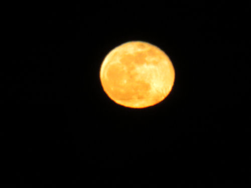 golden moon