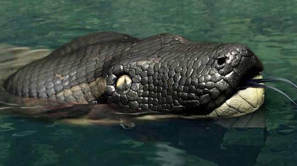 Ular terbesar di dunia bukan anaconda tetapi titanoboa sajian ular terbesar di dunia bukan anaconda tetapi titanoboa reheart Image collections