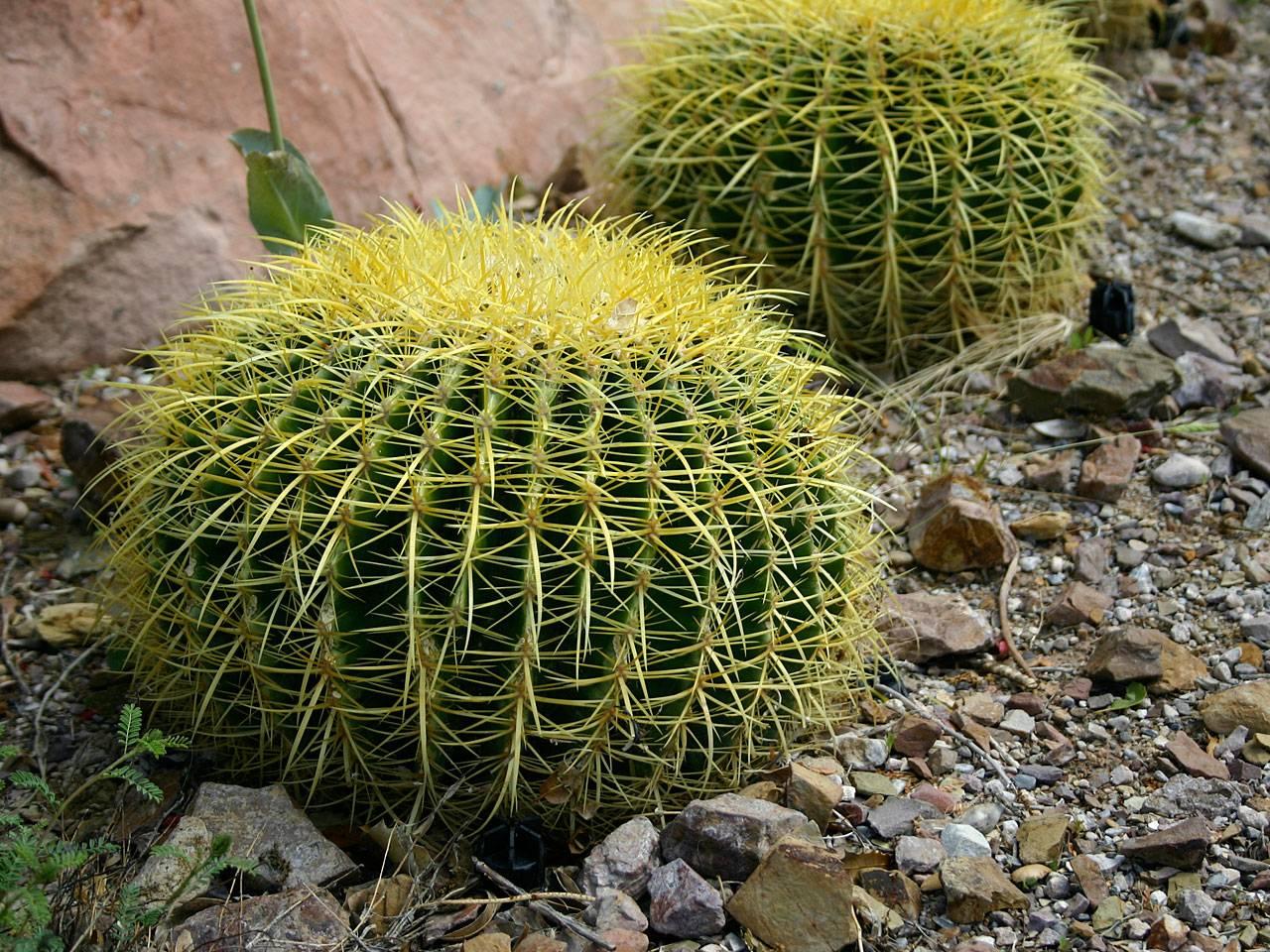 Martin design ita piante grasse come curarle for Piante grasse succulente