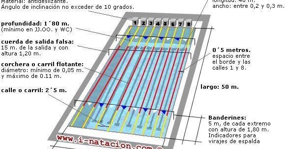Natacion Cpel Dimensiones De Una Piscina Olimpica