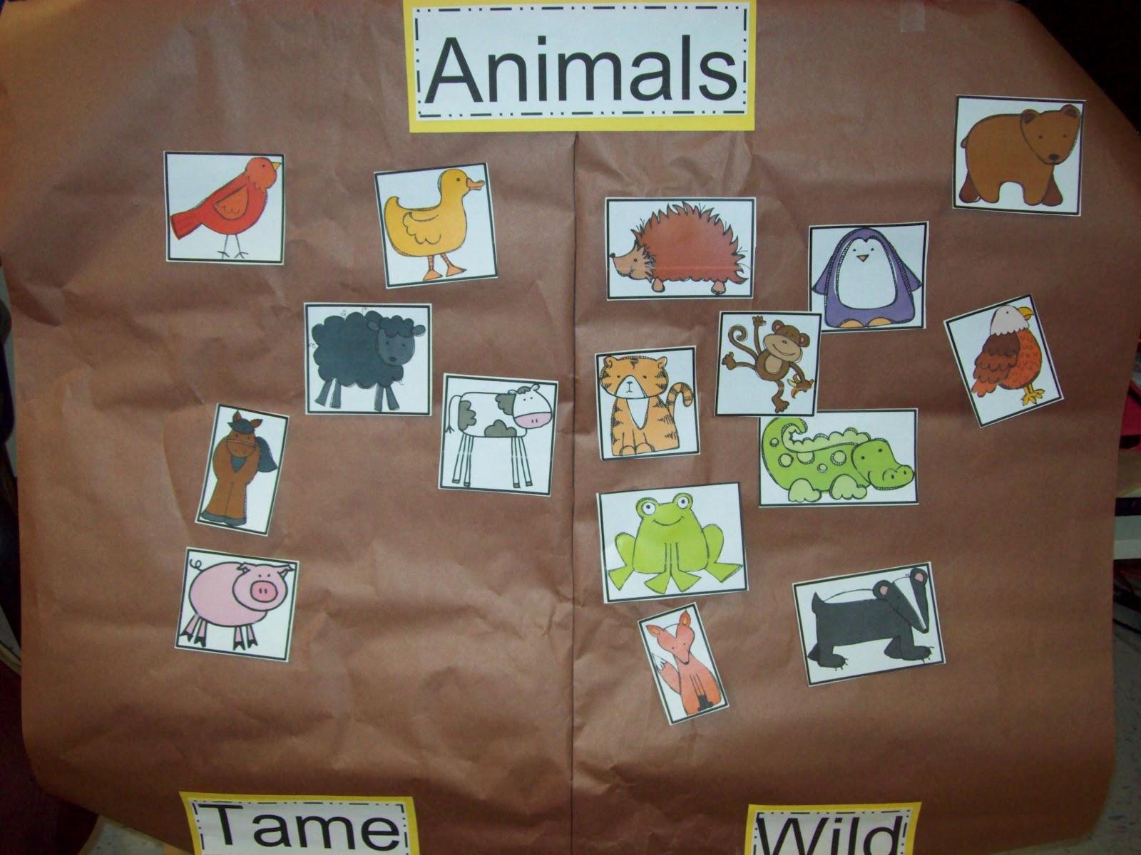 Chalk Talk A Kindergarten Blog Tame Vs Wild Animals
