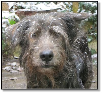 Lotte findet den Schneeregen nicht schön