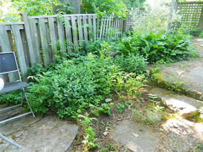 Toronto Backyard Summer Garden Cleanup Before East York by Paul Jung Gardening Services--a Toronto Gardening Company