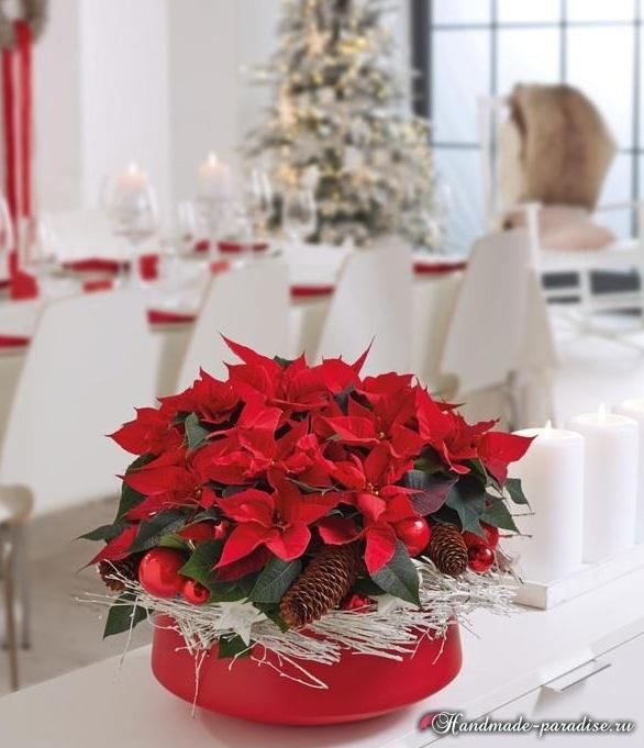 Пуансеттия в новогоднем и рождественском интерьере (8)