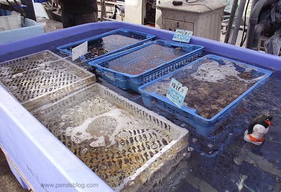 Vente de poisson à Carnon
