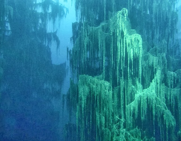 The underwater forest of Lake Kaindy - 15 Things You Won't Believe Actually Exist In Nature