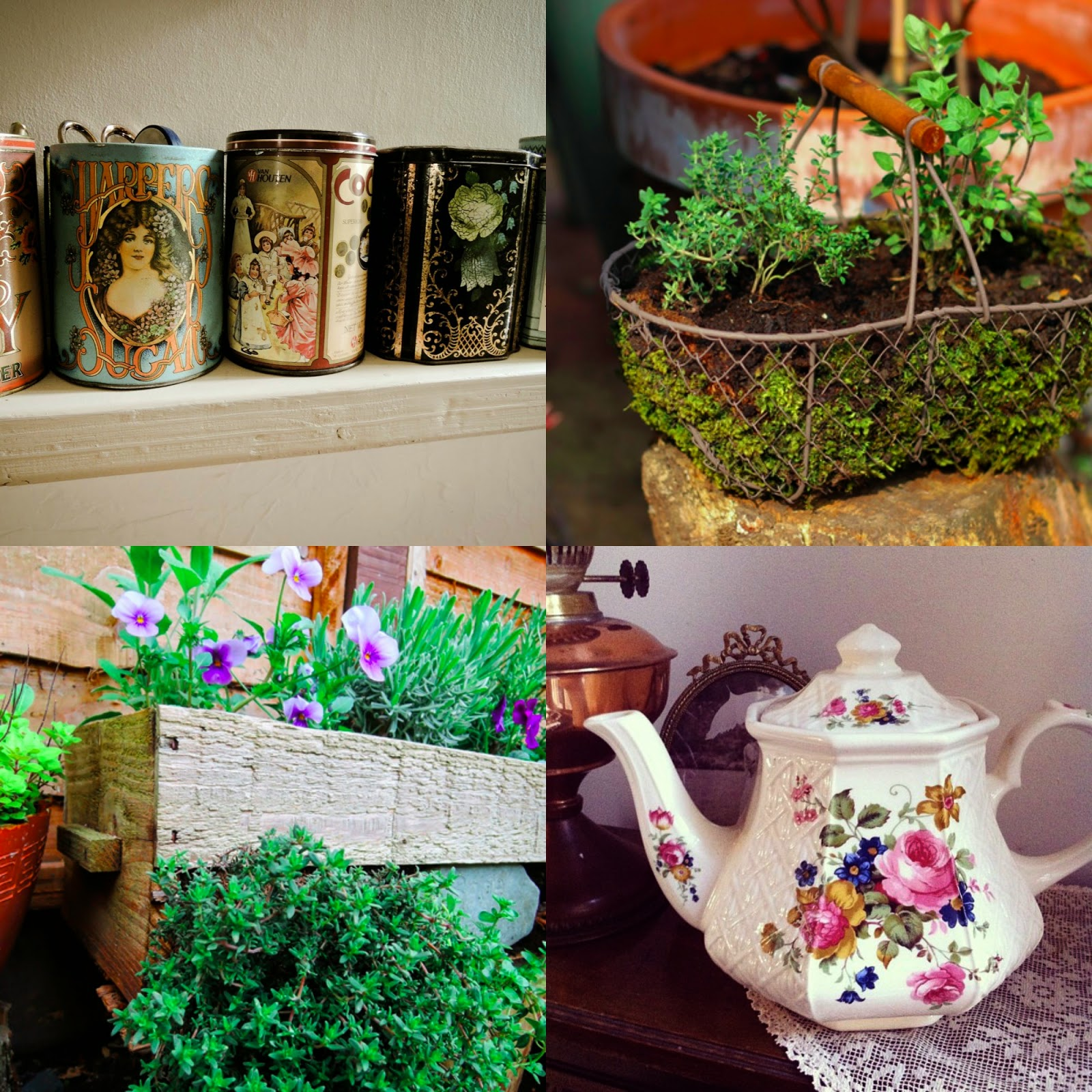 Planting in teapots, tins, baskets and boxes