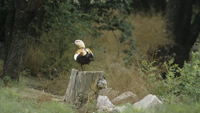 В нижегородском зоопарке неизвестные подстрелили редкую птицу