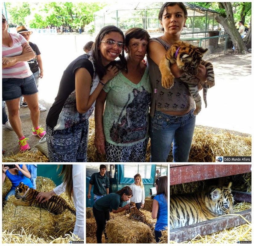Zoo Luján (Buenos Aires) - tigre