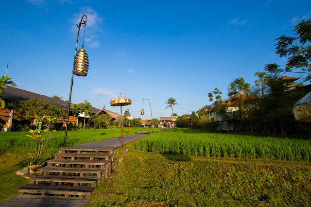 Alaya Ubud resort-Bali-Esterni-Risaie