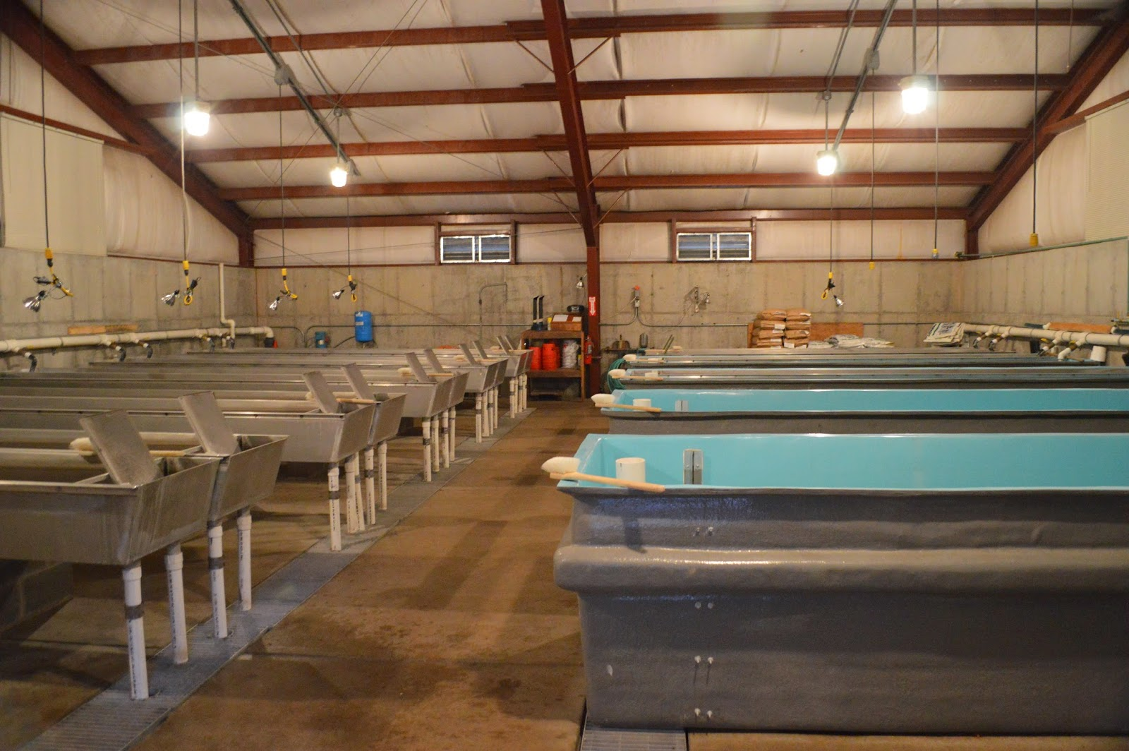 Mark Thomas Geology Blog Sterling Springs Fish Hatchery