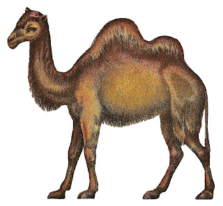 camel illustration antique image circus