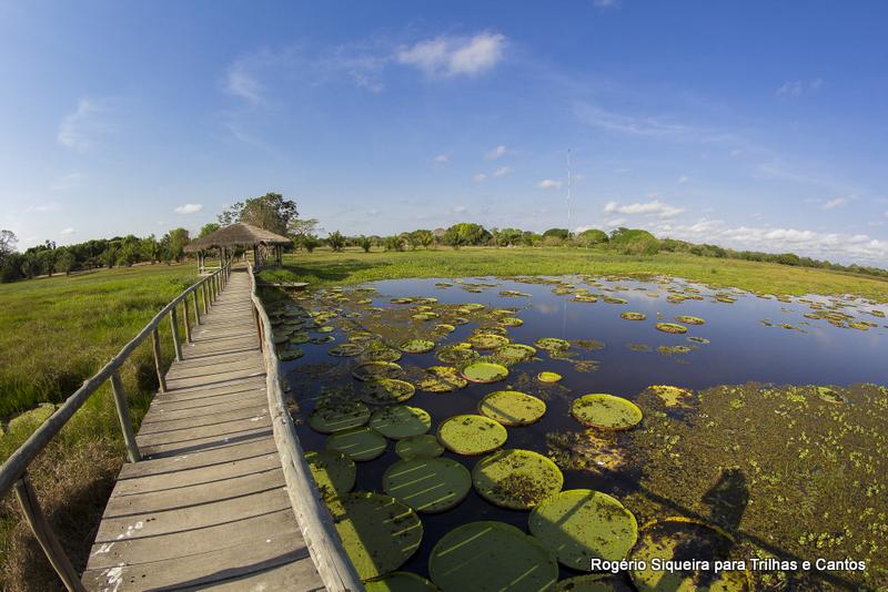 Pantanal Mato Grosso