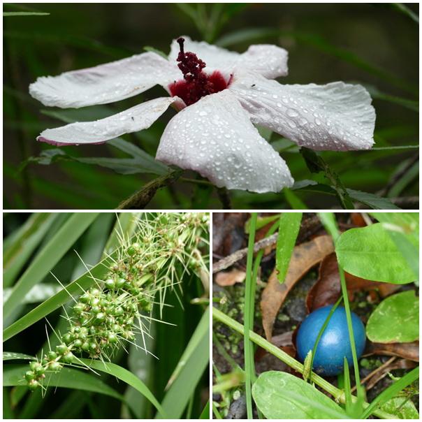 Kondilla Falls Pflanzen Plants Blumen Früchte