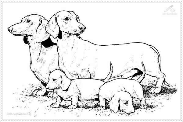 Ausmalbilder zum Ausdrucken: Ausmalbilder Hunde