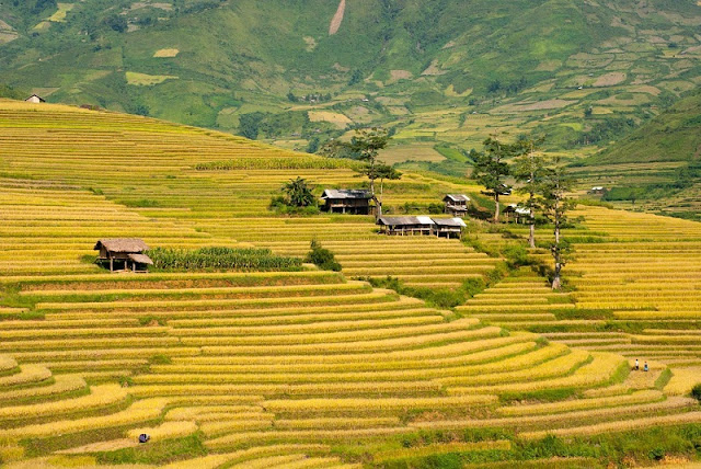 Yen Bai Province, an alluring destination in the northwest 2