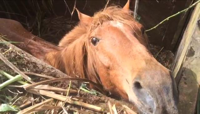 Corpo de Bombeiros de Colombo tem que resgatar égua na vila Zumbi