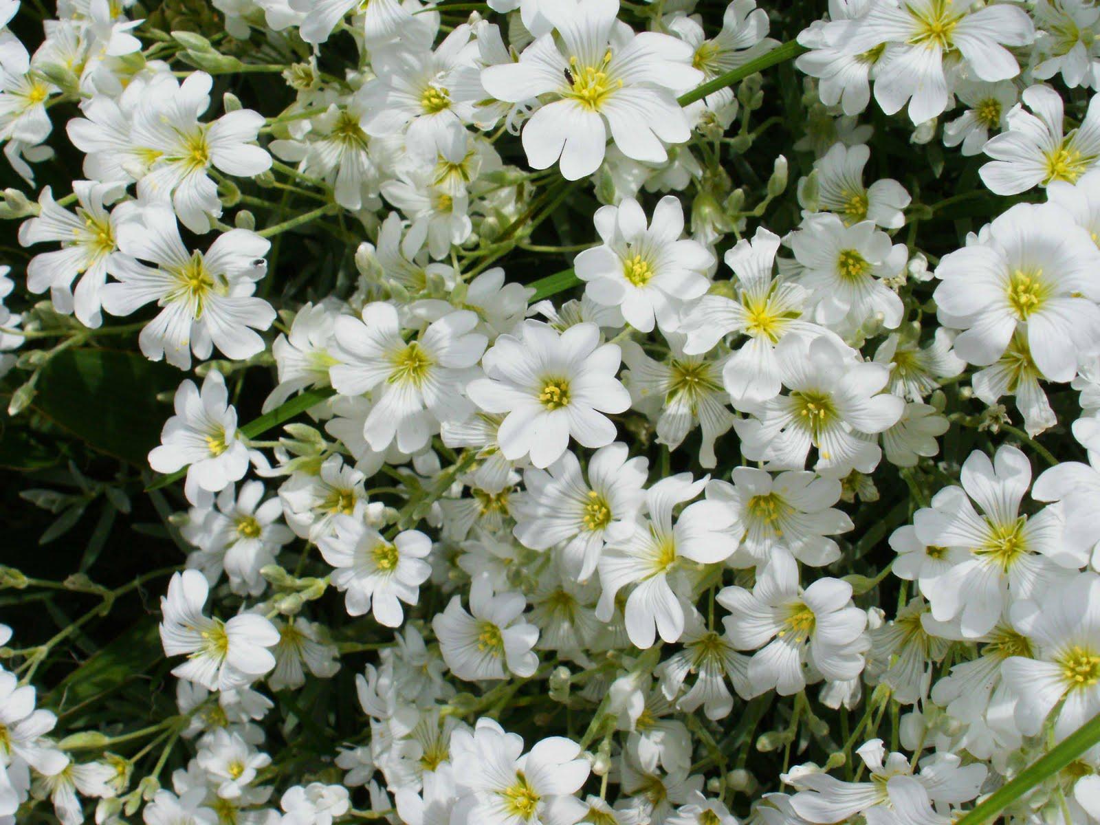 Adquiere Aqui Estos Fondos De Pantalla Con Flores Hermosas: Los Mejores Fondos De Flores