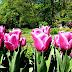 Botanički vrt Varšava