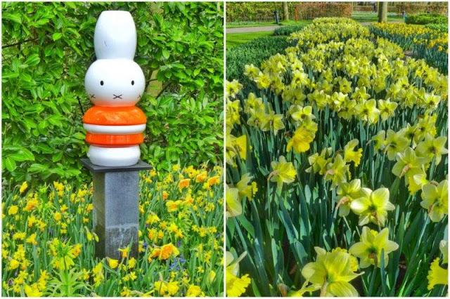 Miffy Nijntje en el parque floral Keukenhof - Narcisos