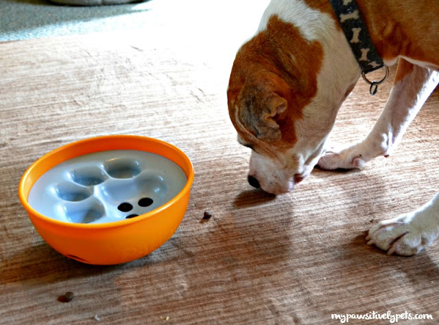 Paw5 Rock N Bowl Puzzle Feeder For Dogs Makes Meals More