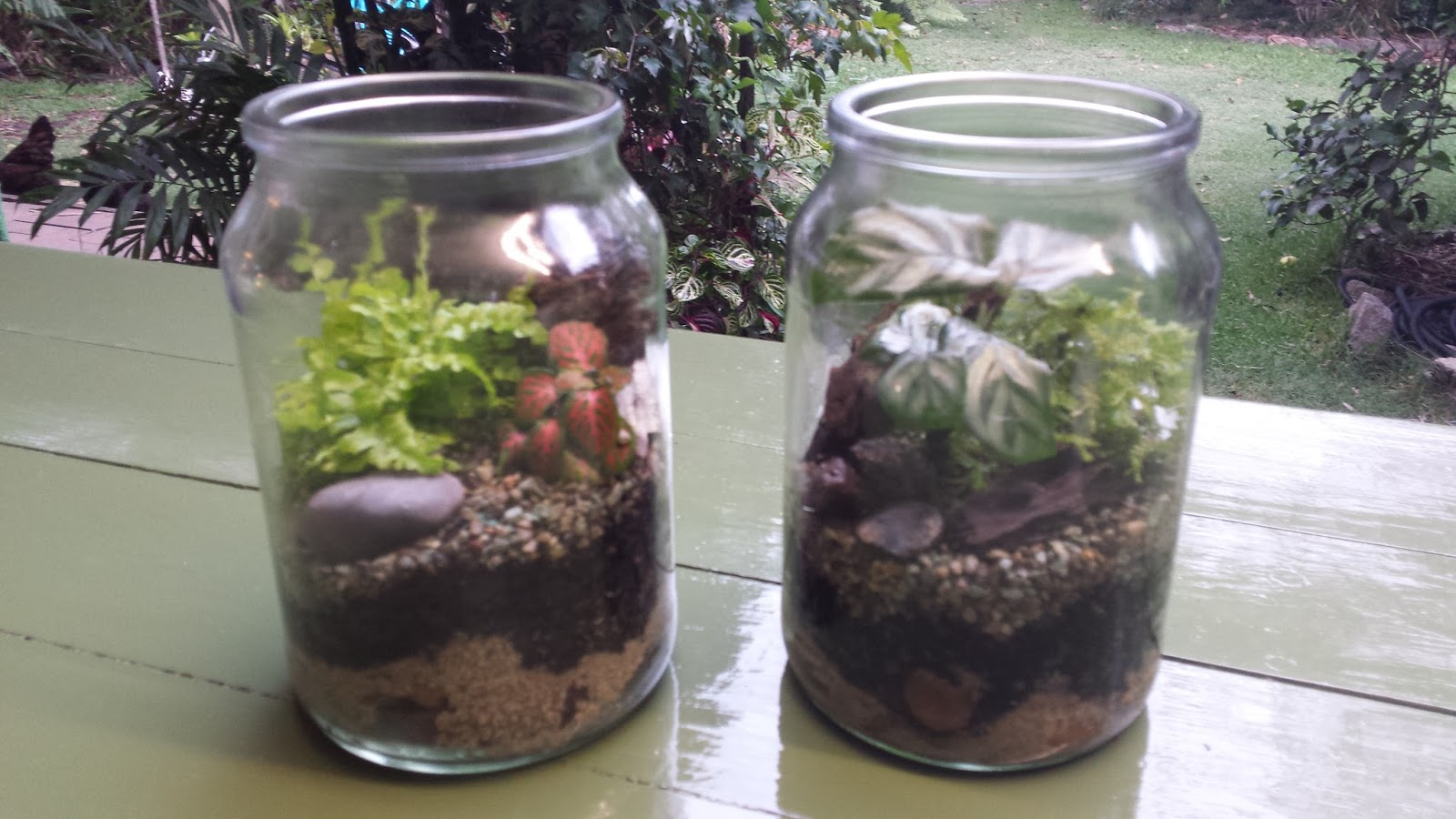 Making A Terrarium Out Of An Old Moccona Jar