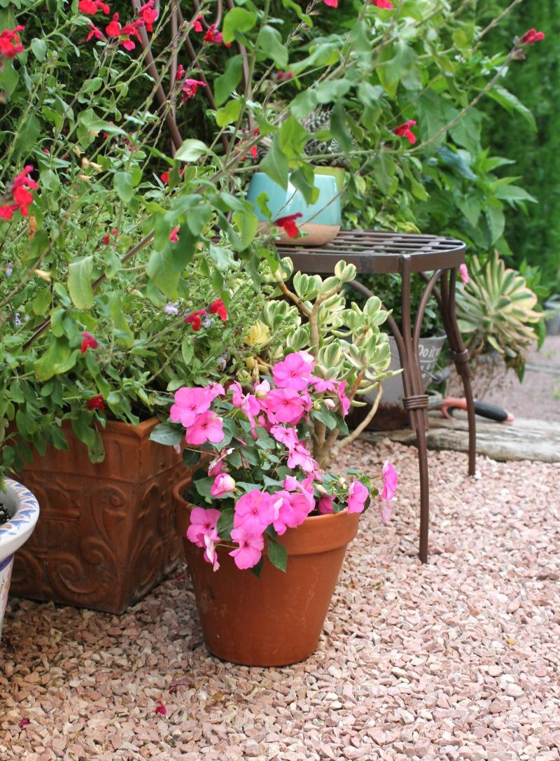 Salvia y alegrias