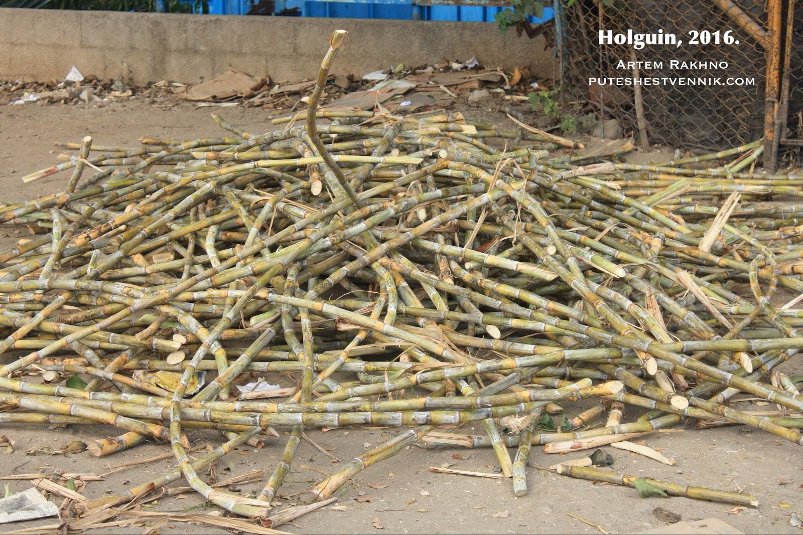 Сахарный тростник на Кубе