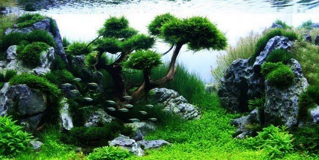 Mengenal Lebih Dalam Tentang Aquascape