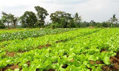 Pengertian Tanaman Organik Dan Manfaatnya