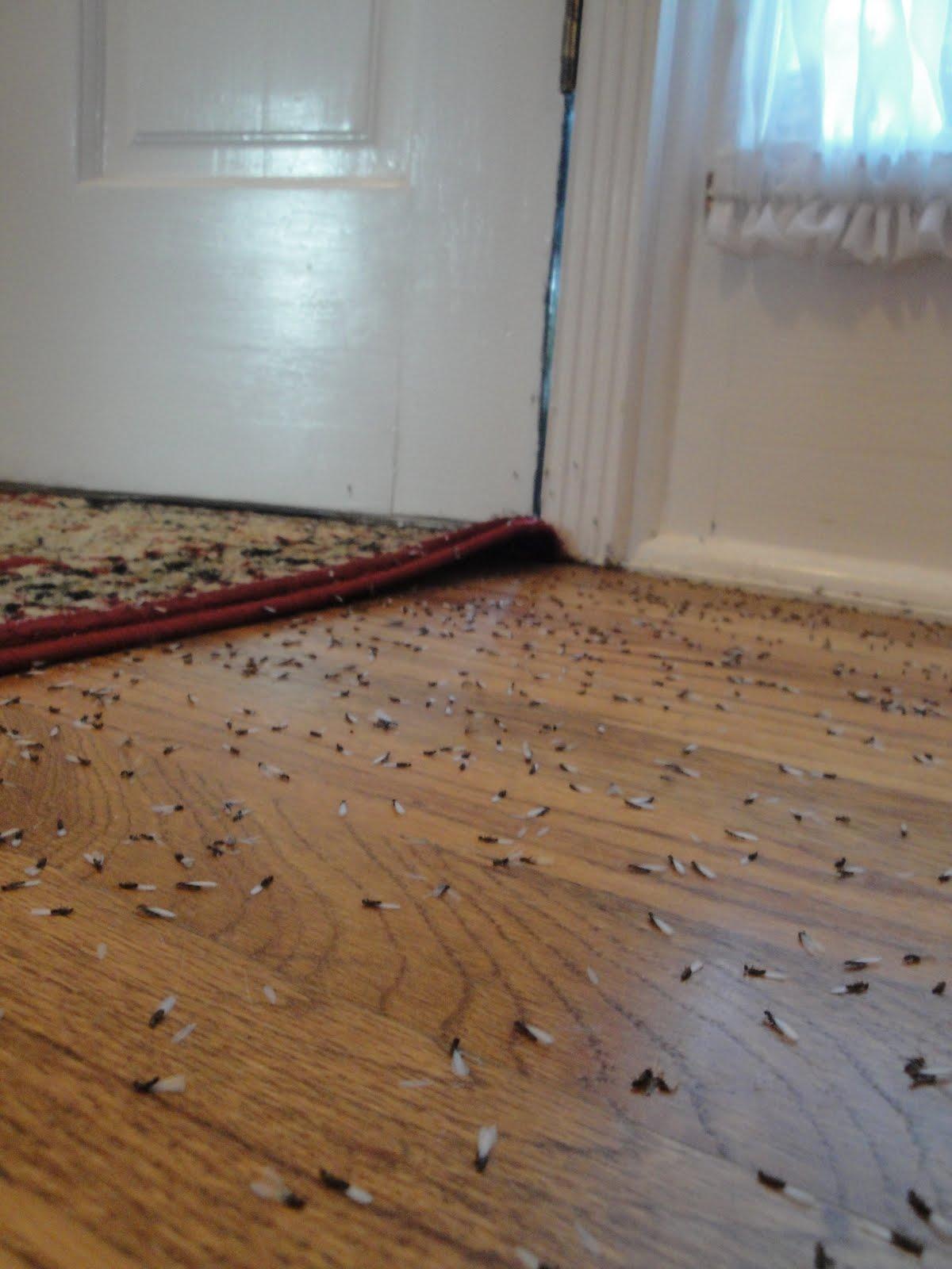 Termites Fumigation House Has Termites