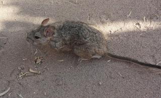 """""""Animales del desierto-2"""""""